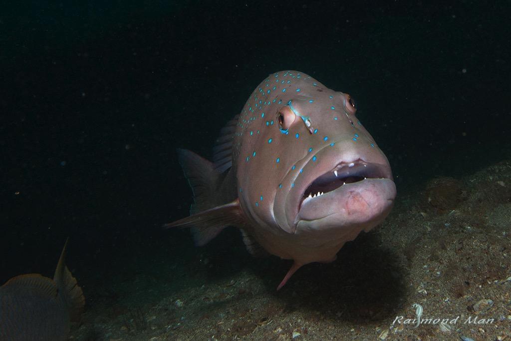 澳洲西部-潛水自駕遊-WEBWC-075.jpg