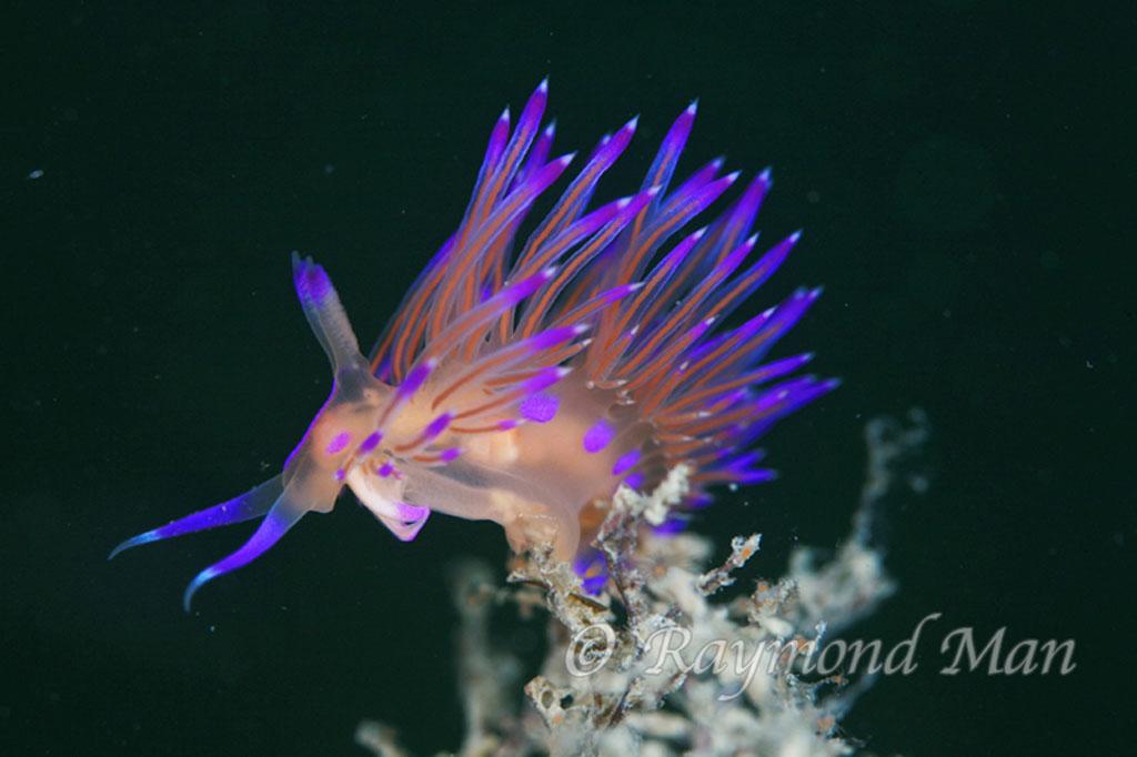 Hong Kong Marine biodiversity