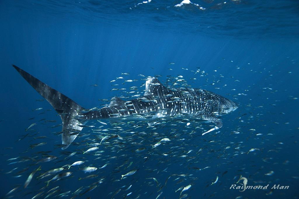 澳洲西部-潛水自駕遊-WEBWC-095.jpg