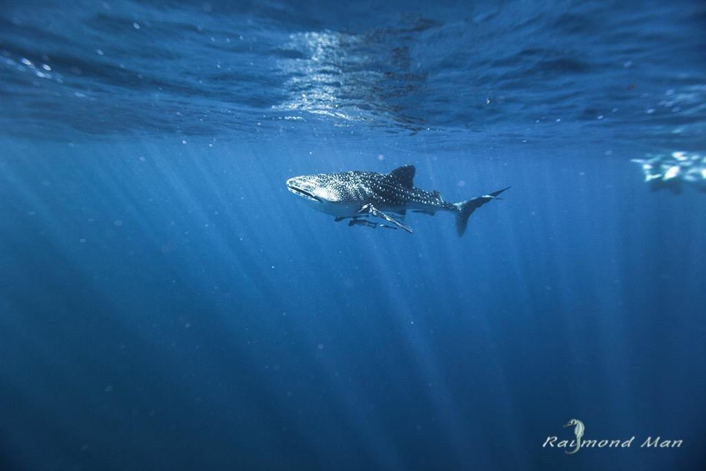 澳洲西部-潛水自駕遊-WEBWC-092.jpg