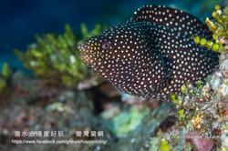 蘭嶼,臺灣 ORCHID ISLAND, TAIWAN-19