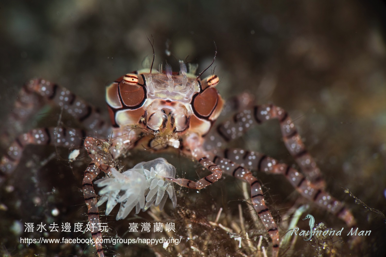 蘭嶼,臺灣 ORCHID ISLAND, TAIWAN-17