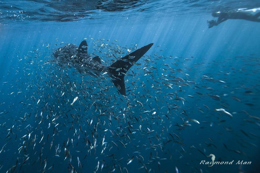 澳洲西部-潛水自駕遊-WEBWC-093.jpg
