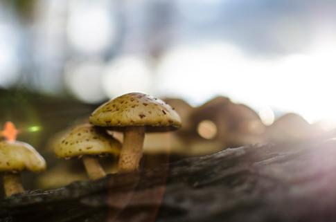 DSC_0247(Mushroom).jpg