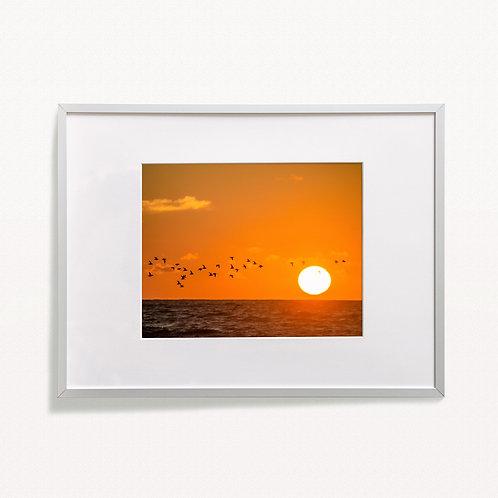 """Sunrise Seabirds"" Print"