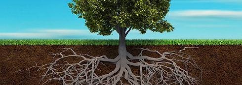 tree-roots-banner.jpg