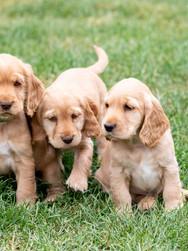 puppies-26.JPG
