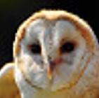 Screen Shot 2021-03-23 at 18.59.11.png
