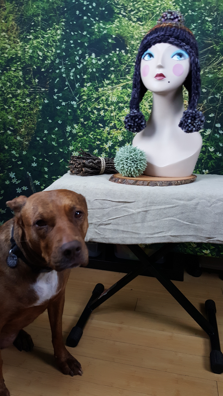 Hazel Dog Model