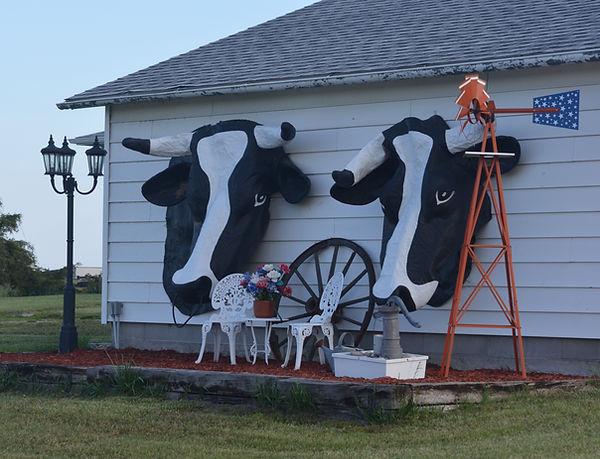 Cow heads.jpg