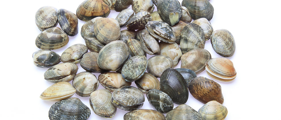 Manila Clams (2lb) - Tacoma