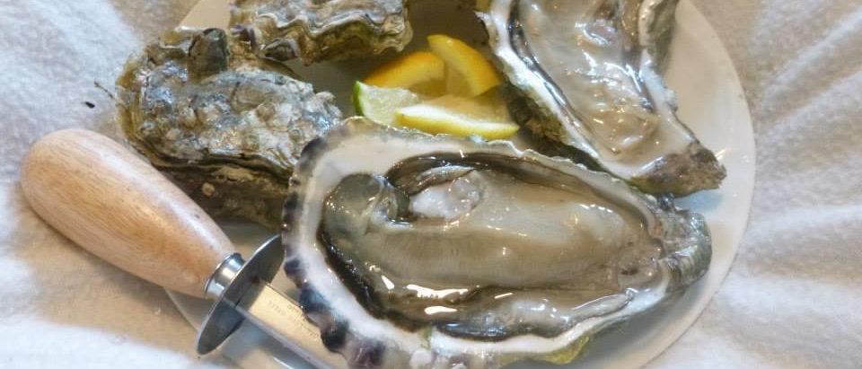 Standard Oyster Opener