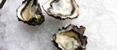 Prime Kumamoto Oysters (Wholesale)