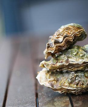 Kurīku Oysters (2 Dozen)