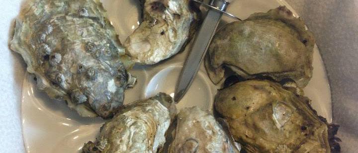 Jumbo Willapa Bay wild oysters