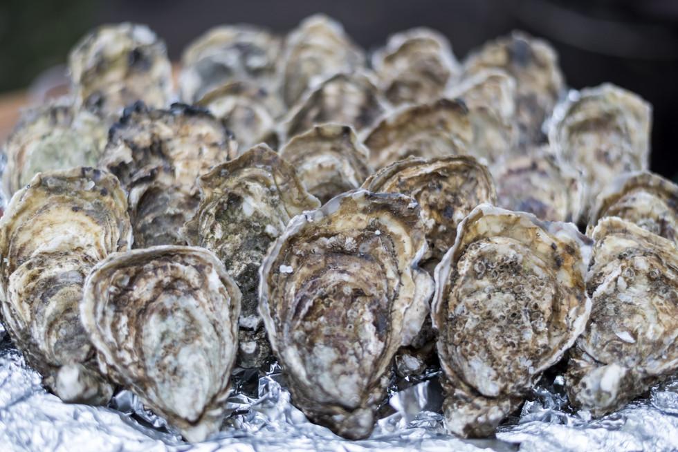 Plenty of fresh closed oysters on ice. C