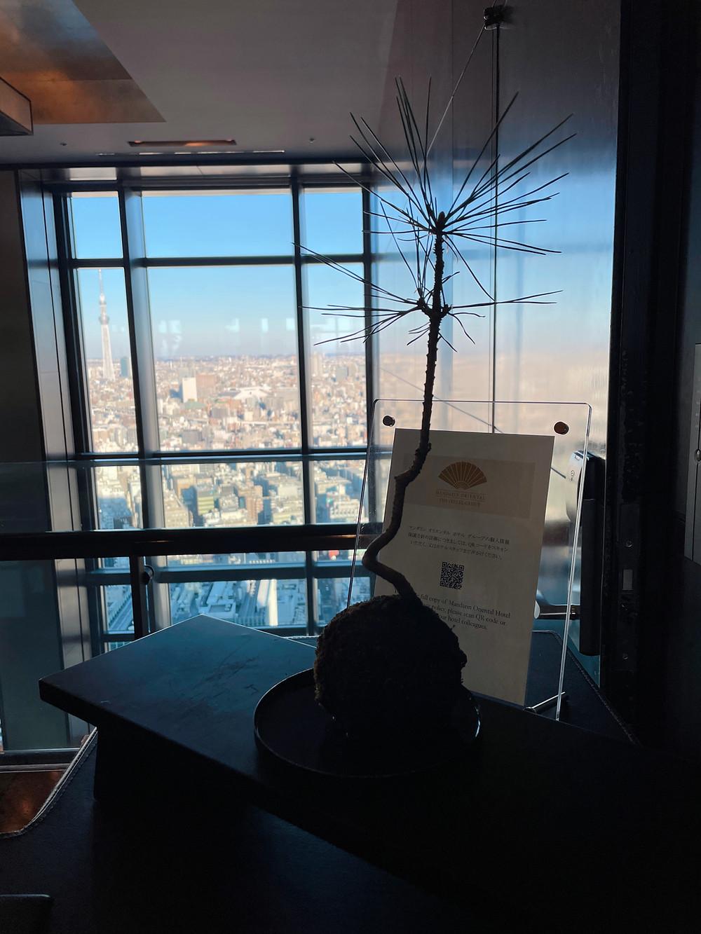 マンダリンオリエンタルホテル東京のフロントからの眺望