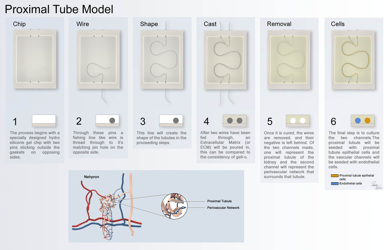 Process Behind Bio-Printing