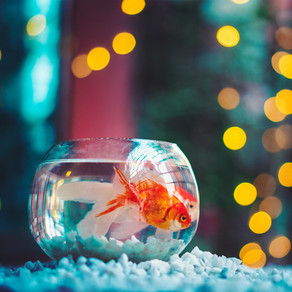 I'd Kill a Goldfish Easier by DS Maolalaí