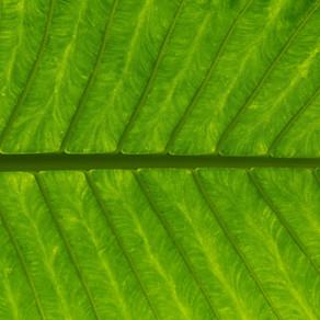 Review of Product Green Piggy Collagen by Shareen K. Murayama