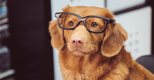 Pets in the Workplace, Our Take on this Rising Trend!