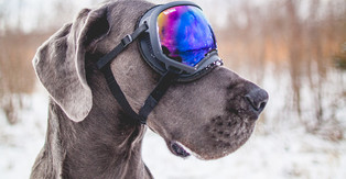 Winterizing your Pets