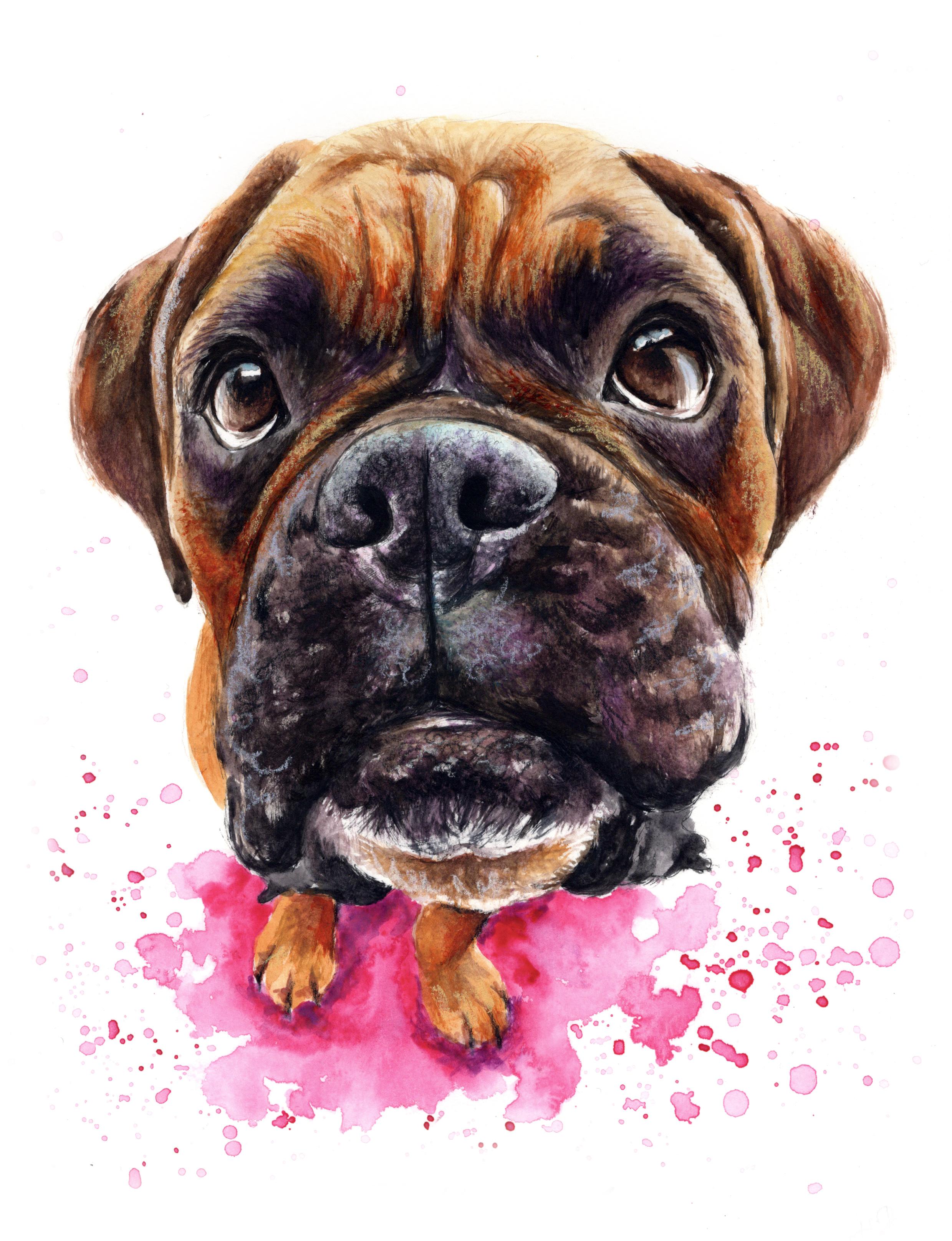 pet-portrait-boxer
