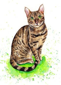 cat-portrait-ralphy