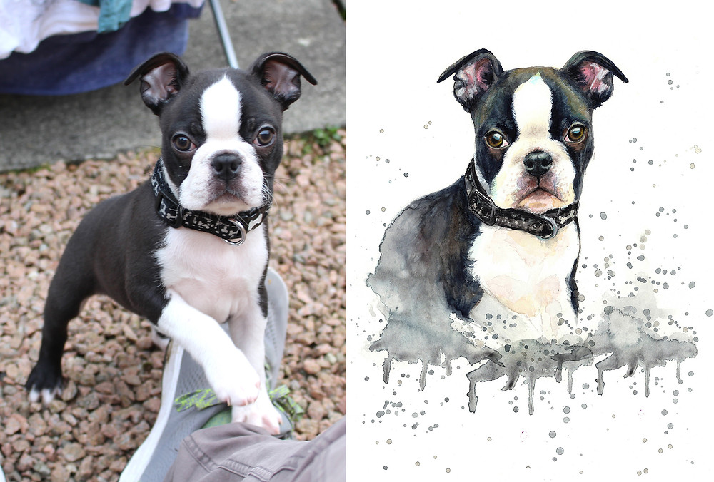 Pet Portrait painting from photo French Bulldog before and after