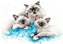 cat-portrait-siamese