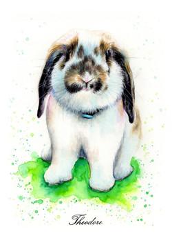 Rabbit Theodore