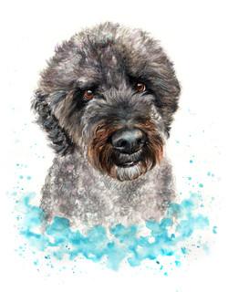 pet-portrait-toby