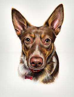 Dog portrait in pastel