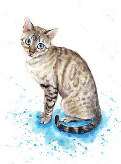 cat-portrait-luna