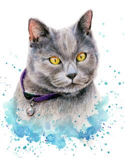 cat portrait grayson