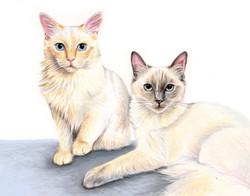 Cats portrait in pastel