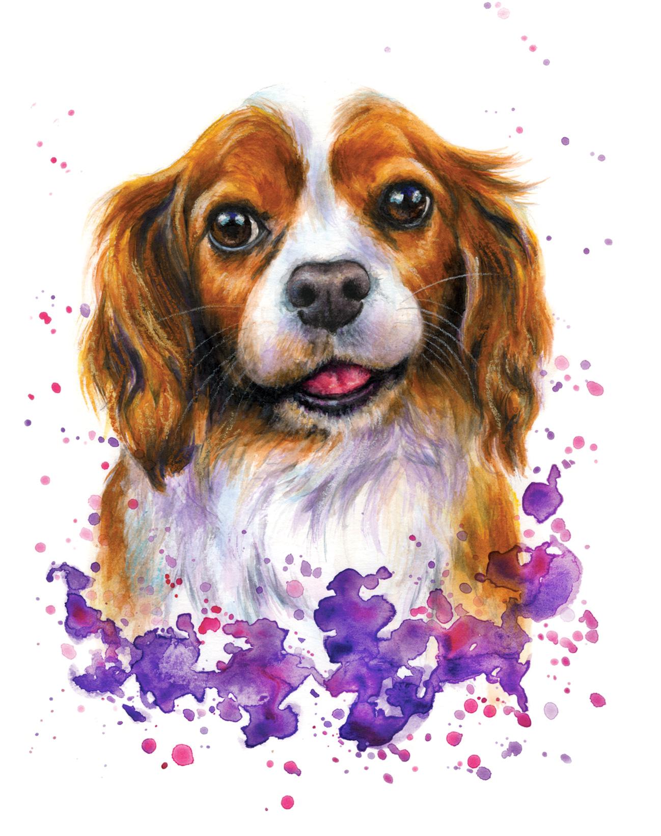 Custom Pet Portrait - Cavalier