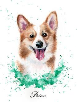 Pet Portrait Brian Corgi
