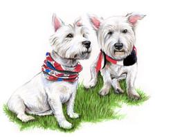 West Highland terrier portrait painting