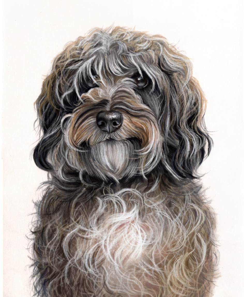 pet portrait in pastel london uk