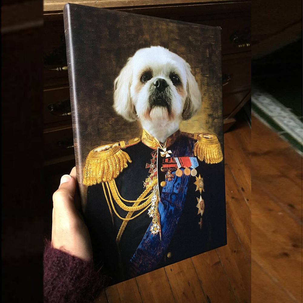 Admiral Pet Portrait canvas uk