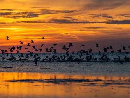 Bir Kuş Kanatlanır Bin Kuş Uçar