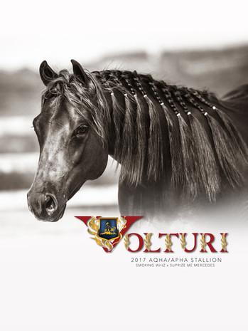 Volturi Ad June 2019.jpg