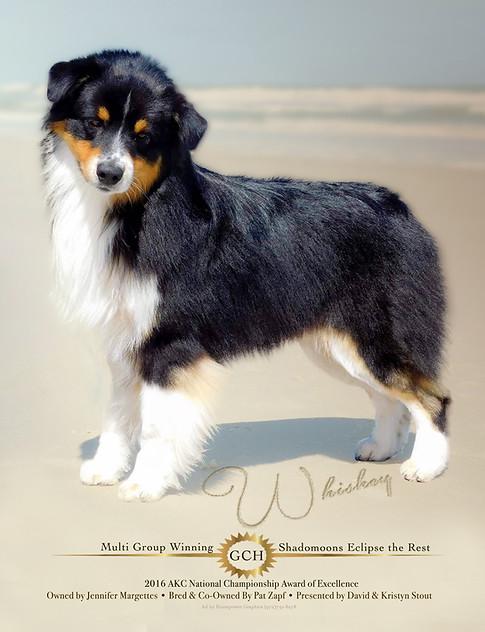 Jennifer Margettes Dog Ad.jpg