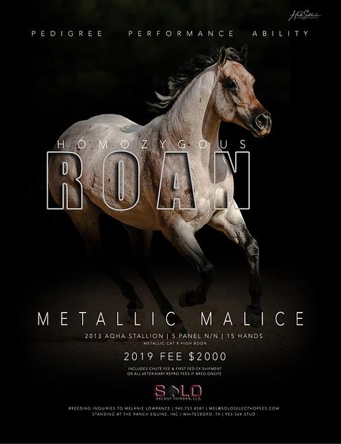 Metallic Malice Roan Ad 2019 RGB.jpg