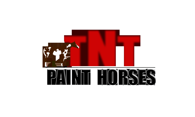 TNT Paint Horses