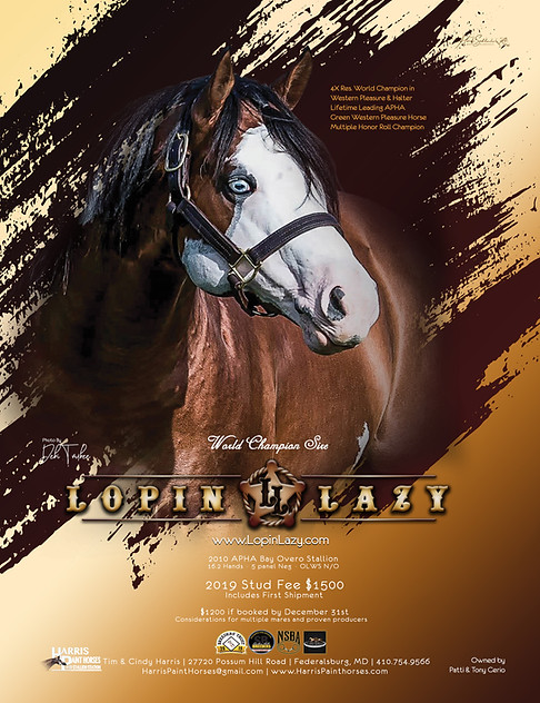 Lopin Lazy 2018 December Ad for Chronicl