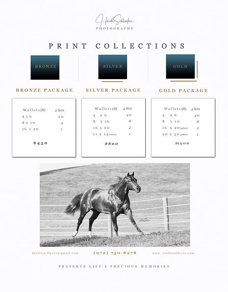 HorsePower Graphics Print Collections Pr