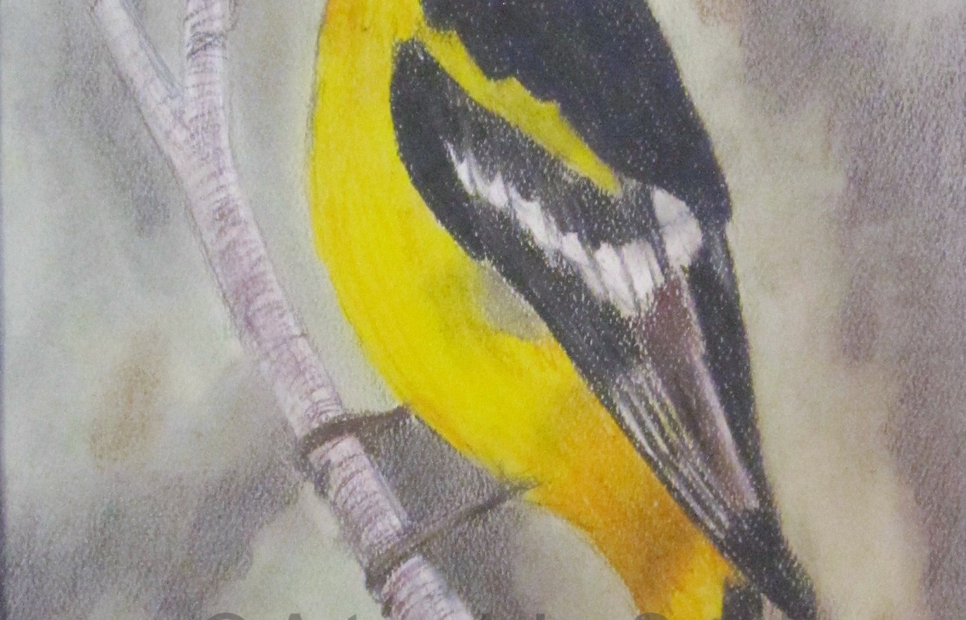 Songbird Collection #5: Western Tanager