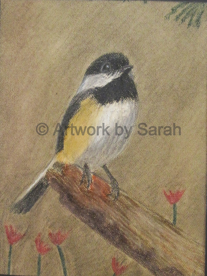 Songbird Collection #1: Black-Capped Chi